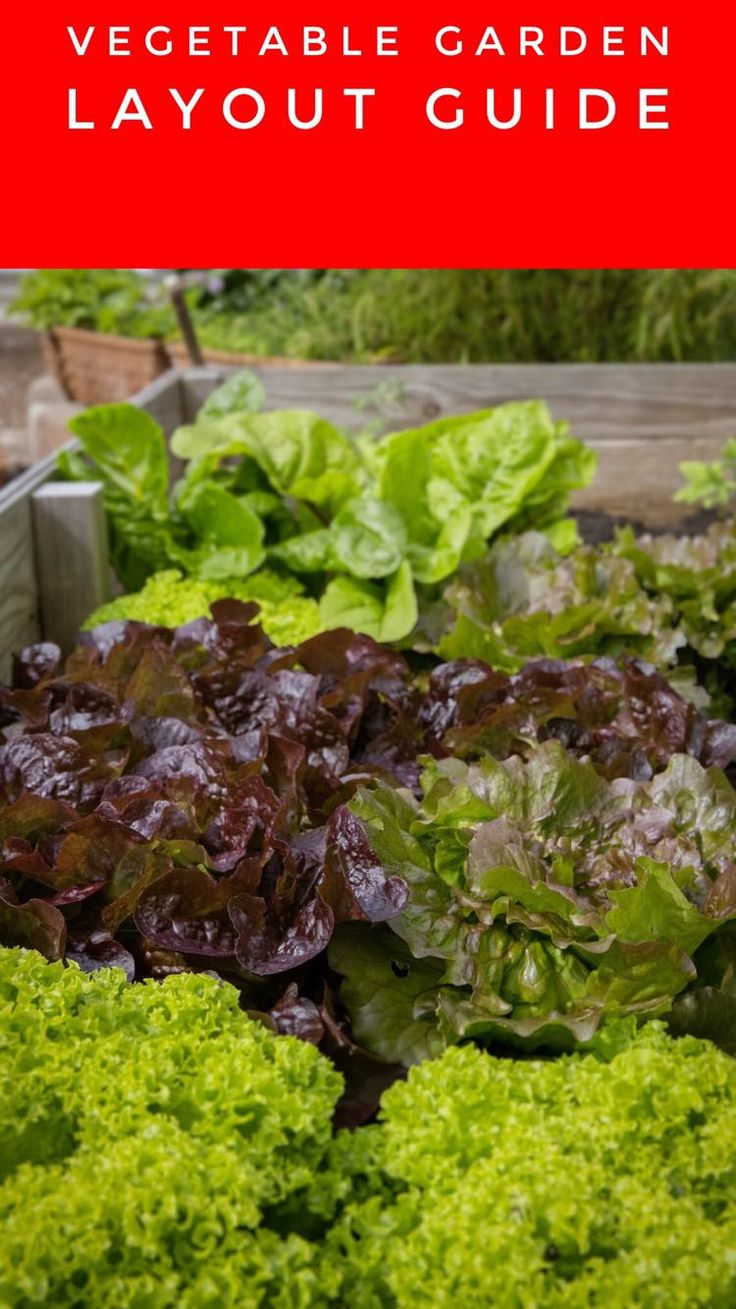 Learn Where To Put Plants In Your Vegetable Garden. Choosing Your Veggie Garden  Layout Can
