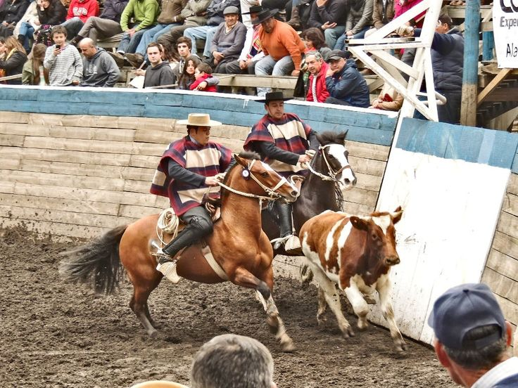 Chilean Rodeo - San Vicente de Tagua-Tagua - Colchagua Valley - O'Higgins Region