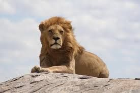 The official Website of the Serengeti National Park, the UNESCO World Heritage Site in Tanzania. Detailed Information on wildlife, conservation, research, …