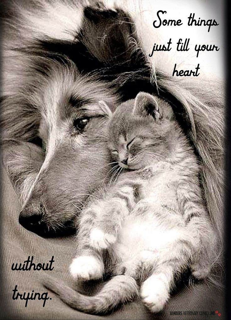 Cute Dog And Cat Quotes