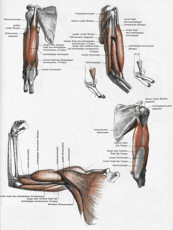37 best Anatomy and Physiology images on Pinterest | Anatomy ...