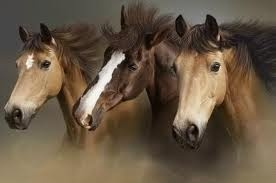 Friends in the dust: Three Out, Cowboys Hats, Pretty Hors, Beautiful Hors, Three Amigos, Google Search, Awesome Photos, Horsesoth Beautiful, Wild Hors