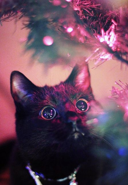 #navidad #gatito #ojotes #magazinefeed