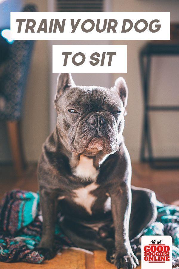 How To Train Your Dog To Sit Dog Training Books Dog Training