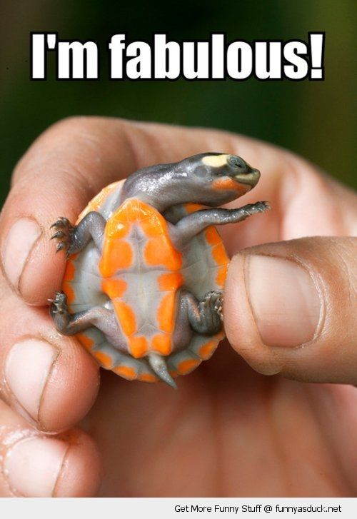 cute baby animals | cute baby turtle hand animal fabulous orange funny pics pictures pic ...