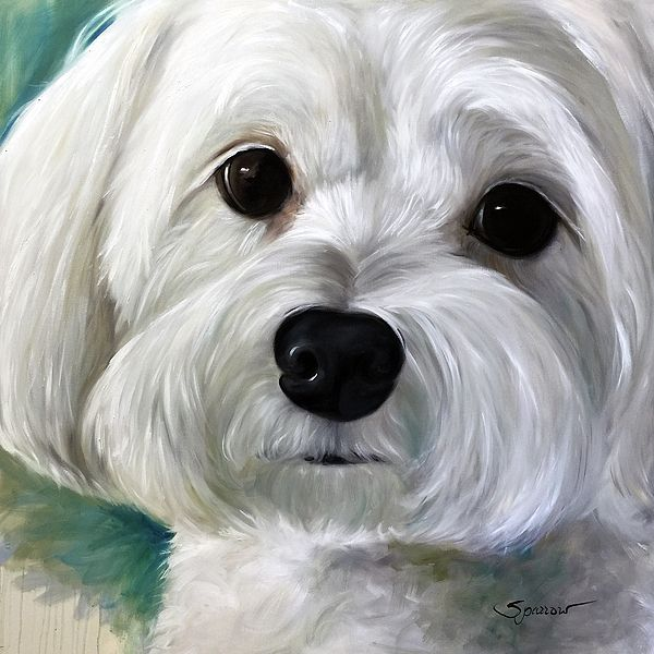 Prints, cards, Pillow, tote bags and more gifts Maltese puppy dog art by Mary Sparrow