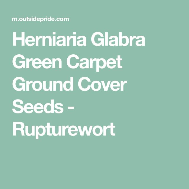 Die besten 25+ Herniaria glabra Ideen auf Pinterest ...