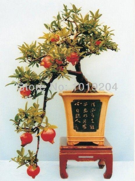 Free shipping, mini 20 PCS red pomegranate seeds, fruit bonsai tree