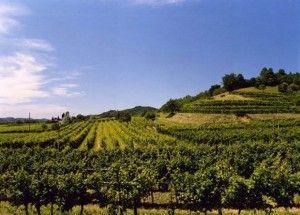 Recensione Vino Refosco: il friulano