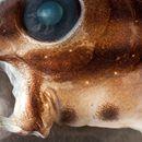 Este diminuto pez es en realidad una bestia con colmillos que inyecta un veneno similar a la heroína - Gizmodo en Español  Gizmodo en Español Este diminuto pez es en realidad una bestia con colmillos que inyecta un veneno similar a la heroína Gizmodo en Español Lo que vemos en las imágenes es un pez tropical diminuto de la familia de los blénidos. Los científicos han descubierto que los peces tienen la capacidad de…