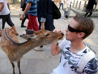 Feeding the deer in Nara, Japan. © Travis Phillips