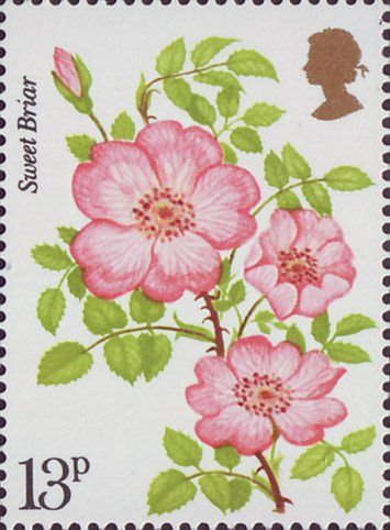 Roses 13p Stamp (1976) 'Sweet Briar'