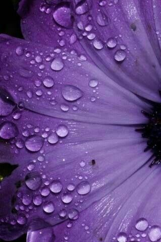 Purple rain drops on flower | Passion for Purple | Pinterest