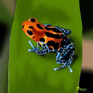Zoge: poison dart frog