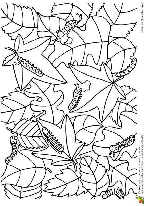 (2014-10) Find 8 larver