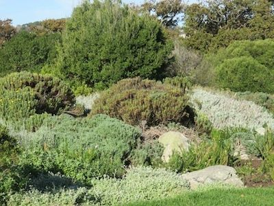 water-wise mulch, ground cover and no lawn - plant