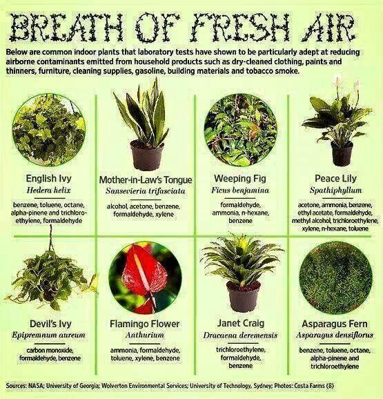32 best bioremediation phytoremediation mycoremediation for Best plants to improve air quality