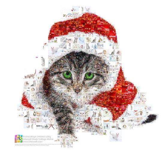 Photo collage - Christmas Kitten