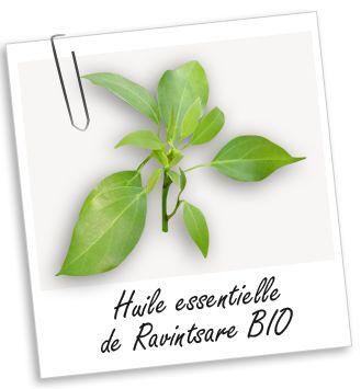 HE Ravintsare : antiviral, microbicide, tonique nerveux / dépression, angoisse : 1-2 gttes face interne poignets, à respirer plusieurs x/jr / Insomnie : 4-6 gttes massages plexus ou long colonne - 10 gouttes + lait ds bain / Grippe, bronchites, rhino-pharyngites : diluée dans HV friction poitrine + haut dos + inhalation, 2-3 x/jr ( +Eucalyptus radié)