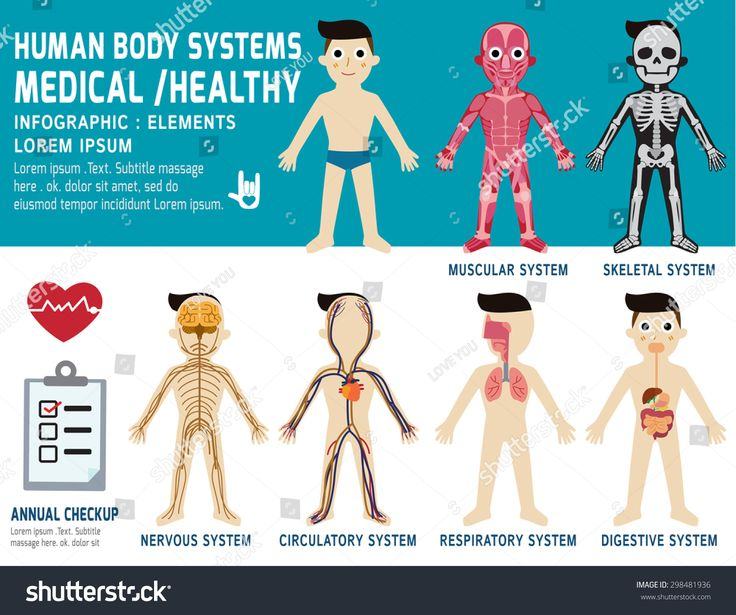 Image result for body systems illustration