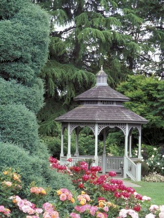 Gazebo and Roses in Bloom at the Woodland Park Zoo Rose Garden, Washington