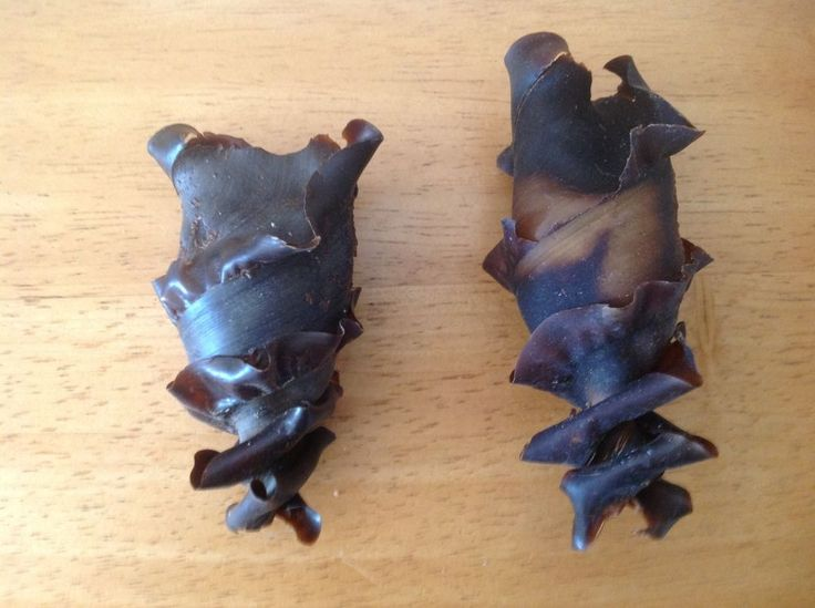 Set of 10 HORN SHARK egg cases 3