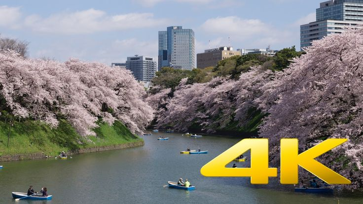 Tokyo Cherry Blossom near Chidorigafuchi - 千鳥ヶ淵 - 4K Ultra HD www.TokyoStreetView.com