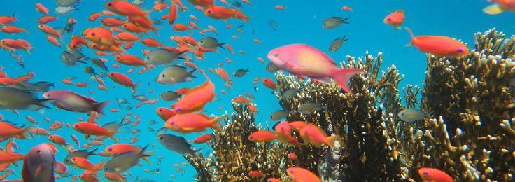 """lest mehr über meinen Blogpost """"die unglaubliche Unterwasserwelt des Roten Meeres"""" #ägypten #rotesmeer #unterwasserwelt #fische #blog #blogger #reiseblogger"""