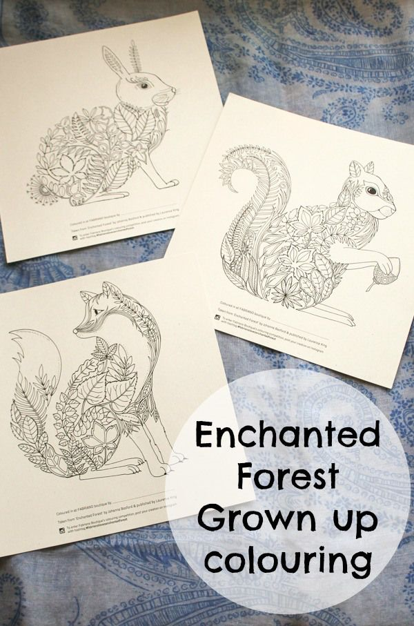 Enchanted Forest Colouring Competition At Fabriano Boutique
