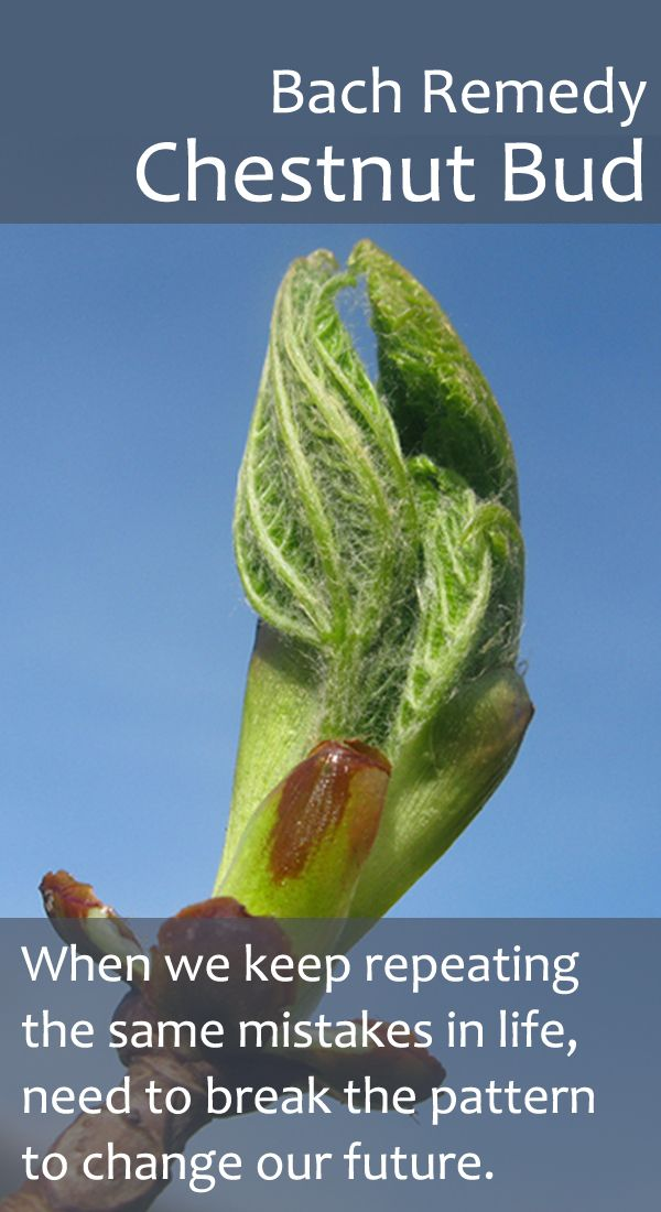 Bach Flower Remedy - Chestnut Bud - Helping us break old patterns and create the future that we desire and deserve.