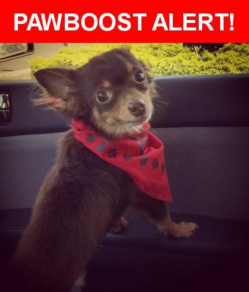 Please spread the word! Dutch was last seen in Battle Ground, WA 98604.    Nearest Address: Near NW 6th Ave & NW Onsdorff Blvd