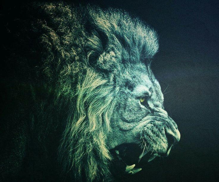 Roaring lion Lion wallpaper, Lion hd wallpaper, Lion
