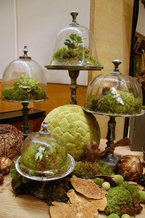 Weathered iron dommed pedestal terrariums contained mounds of mosses, succulents and ferns with subtle accents of jeweled insects were featured on preserved mushrooms.