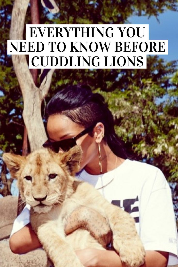 Love lions? You need to read this!