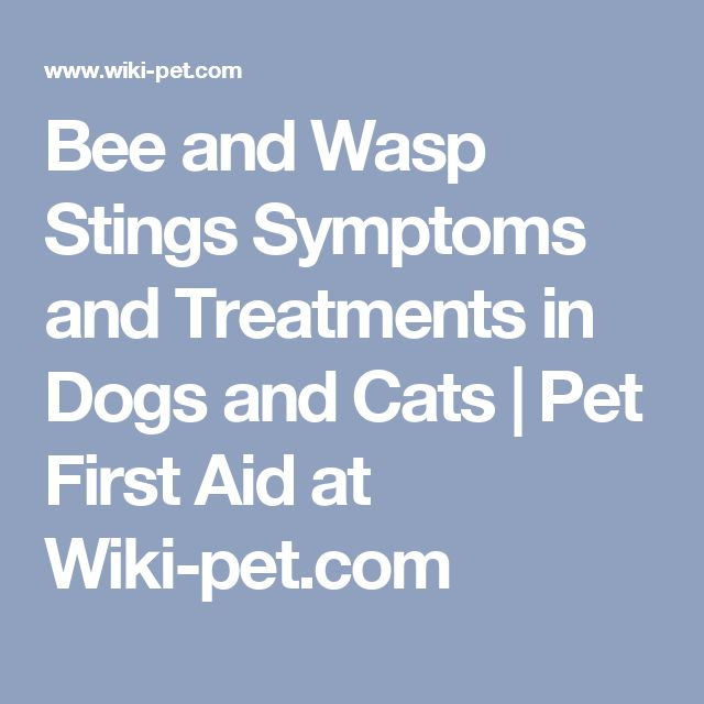 Bee and Wasp Stings Symptoms and Treatments in Dogs and Cats | Pet First Aid at Wiki-pet.com