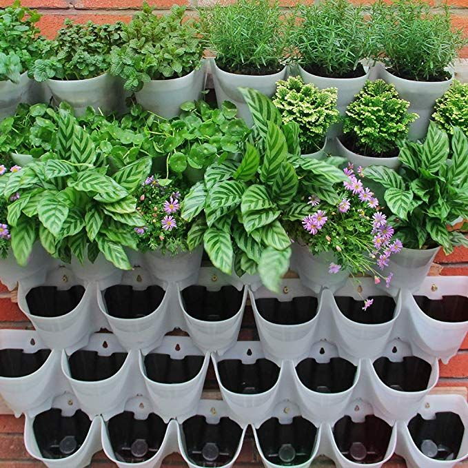Self Watering Vertical Wall Hangers With Pots Included Wall Plant Hangers Each Wall Mounted H Wall Plant Hanger Self Watering Planter Growing Herbs At Home