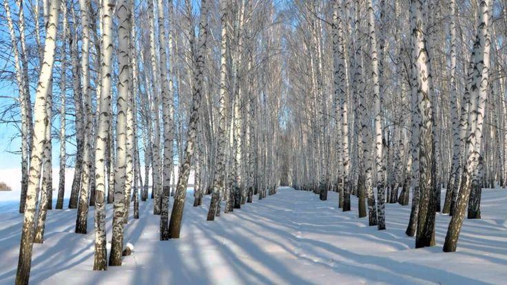 Береза С Есенин | Зимние деревья, Береза, Зимние картинки