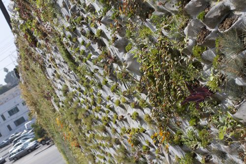green wall  BLANK SLATE – GARDEN WALLS