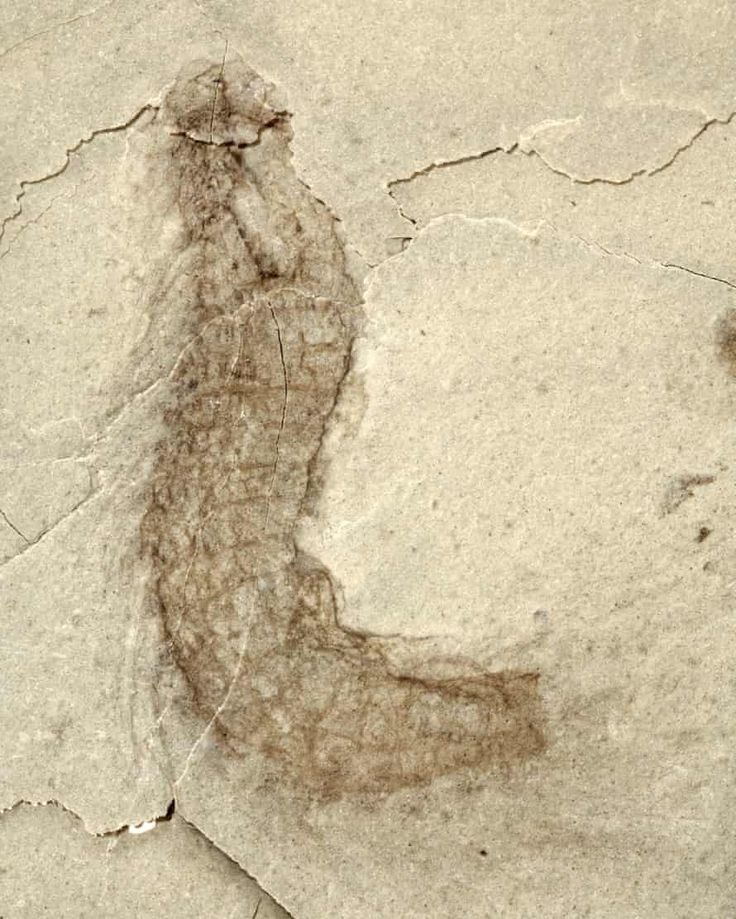 'Mindblowing' haul of fossils over 500m years old