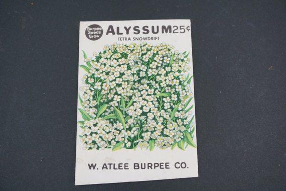 Seed Package, Burpee Seeds, W. Atlee Burpee Co., Alyssum, Tetra Snowdrift, Vintage 1950's  Vintage Garden, Greenhouse, Free 1st Class Ship