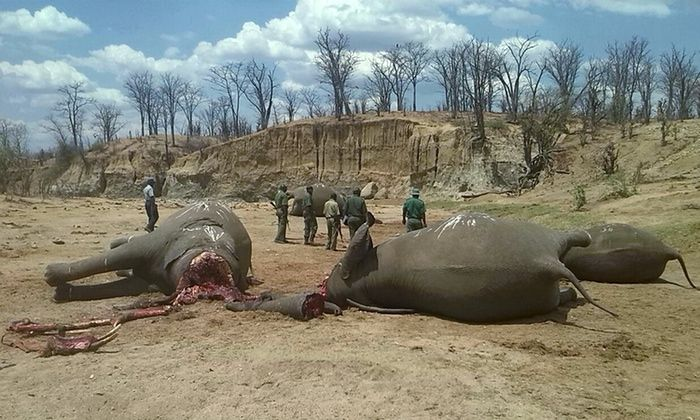Illegal wildlife trade Environment minister says improved working conditions will help stop poaching in Hwange national park Journalists arrested for linking police with elephant poisonings A group…