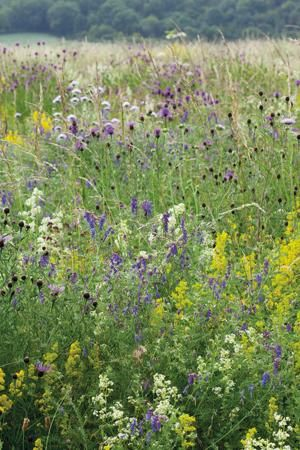 Wild flower seed mix. Great for butterflies and other pollinators!