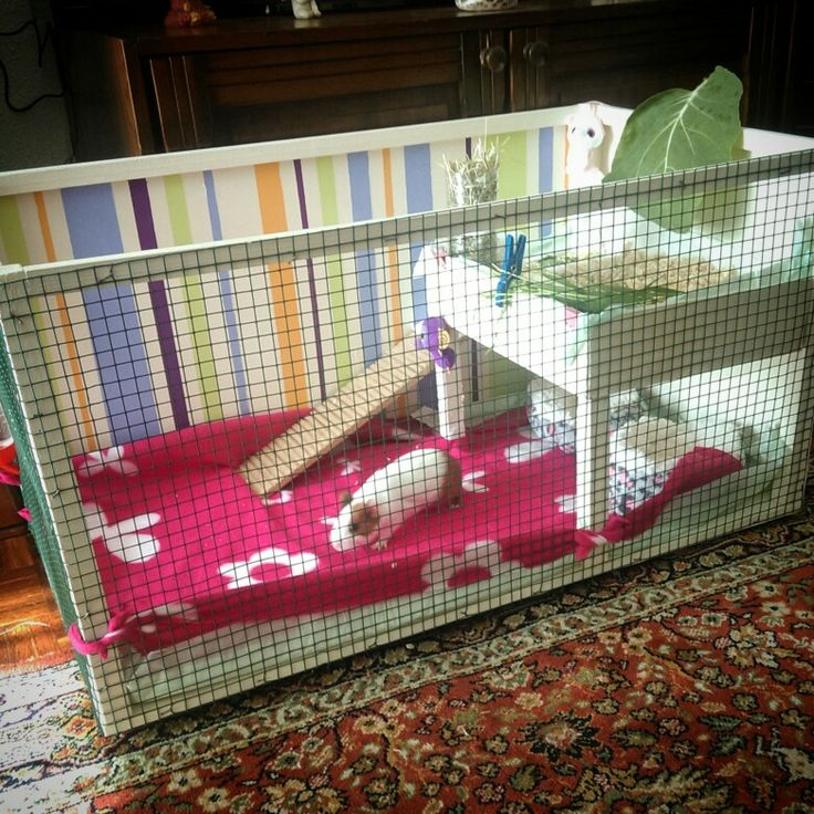 31 best casa porquinho da india images on pinterest for Diy guinea pig hutch
