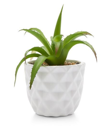 white artificial cactus plant pot new look sheffield. Black Bedroom Furniture Sets. Home Design Ideas