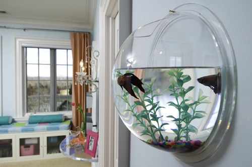 Wall fish-tank........ SO cool!!!! definitely going to be adding this to my wall:)