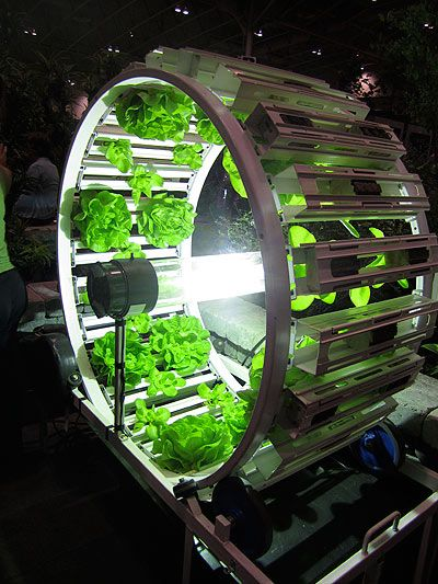 17 Best ideas about Hydroponics on Pinterest Hydroponic