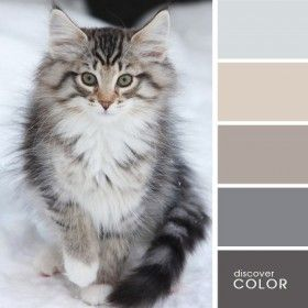 DiscoverColor.ru   Вдохновляющие цветовые палитры
