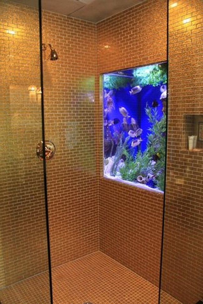 fish tank in the shower wall
