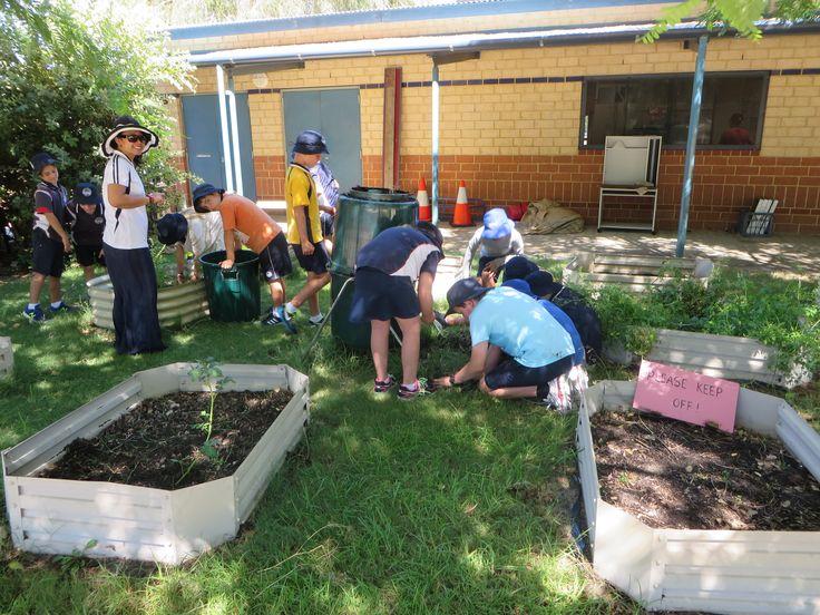 7 best Gardening at Secret Harbour Primary School images on ...