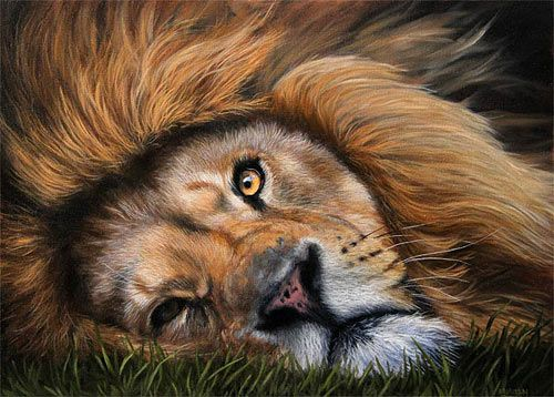How to paint fur - lion painting tutorial by Jason Morgan. A brief introduction to the stages of painting a Lion in oil paints.